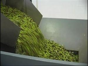 Oliven-Schütte