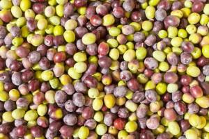 Olivenöl: Qualität & Güteklassen