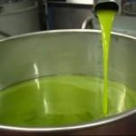 frisches, grünes Olivenöl Extra Vergine
